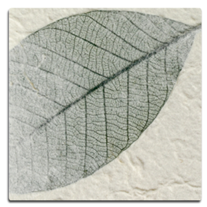 Paper Kozo - Fossil Leaf Green